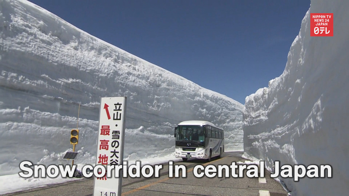 Famous snow corridor reopens in central Japan