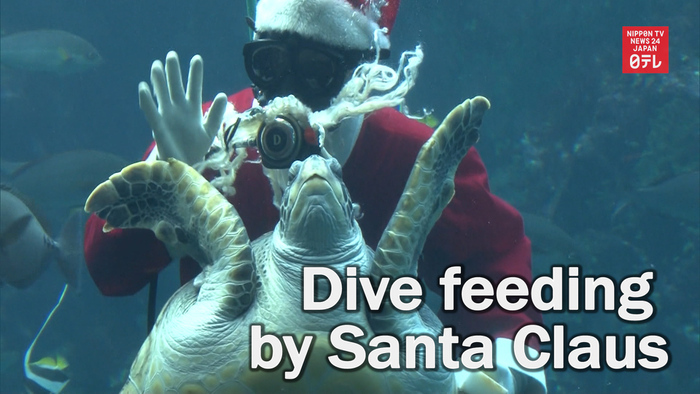 Dive feeding by Santa Claus