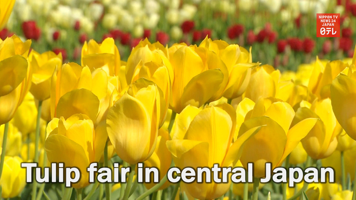 Tulip fair in central Japan