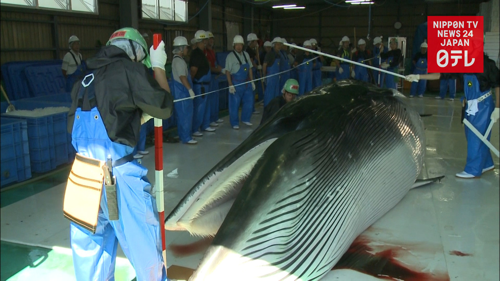 Japan to restart commercial whaling next July