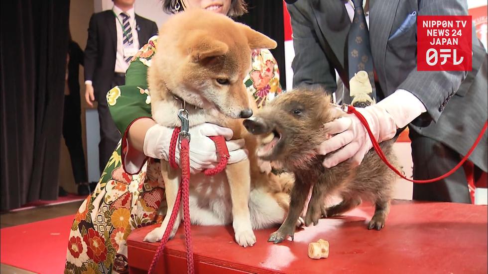 Zodiac baton relayed from dog to boar
