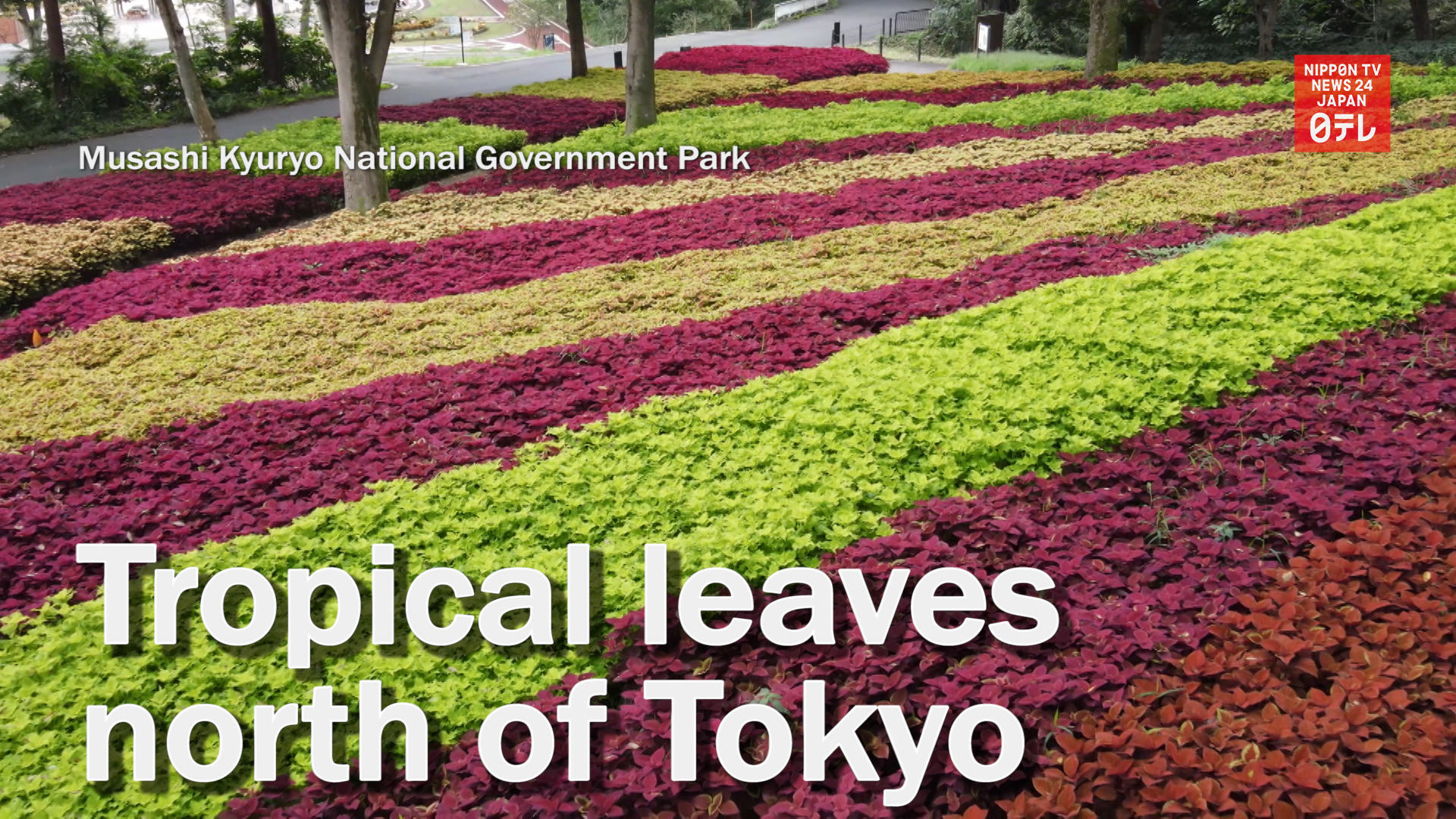 Tropical plants flourish in north of Tokyo