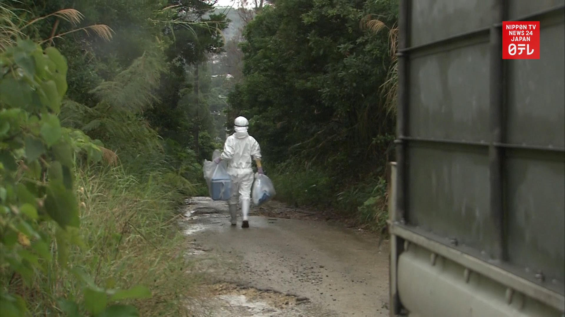 1,800 pigs to be culled in Okinawa after swine fever outbreak
