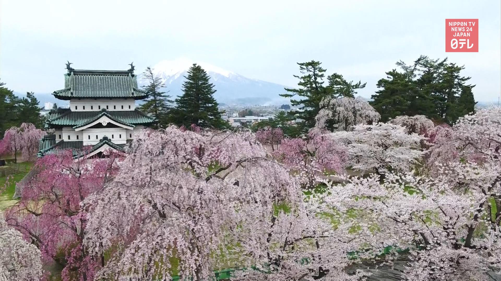 Aomori's landmark park reopens