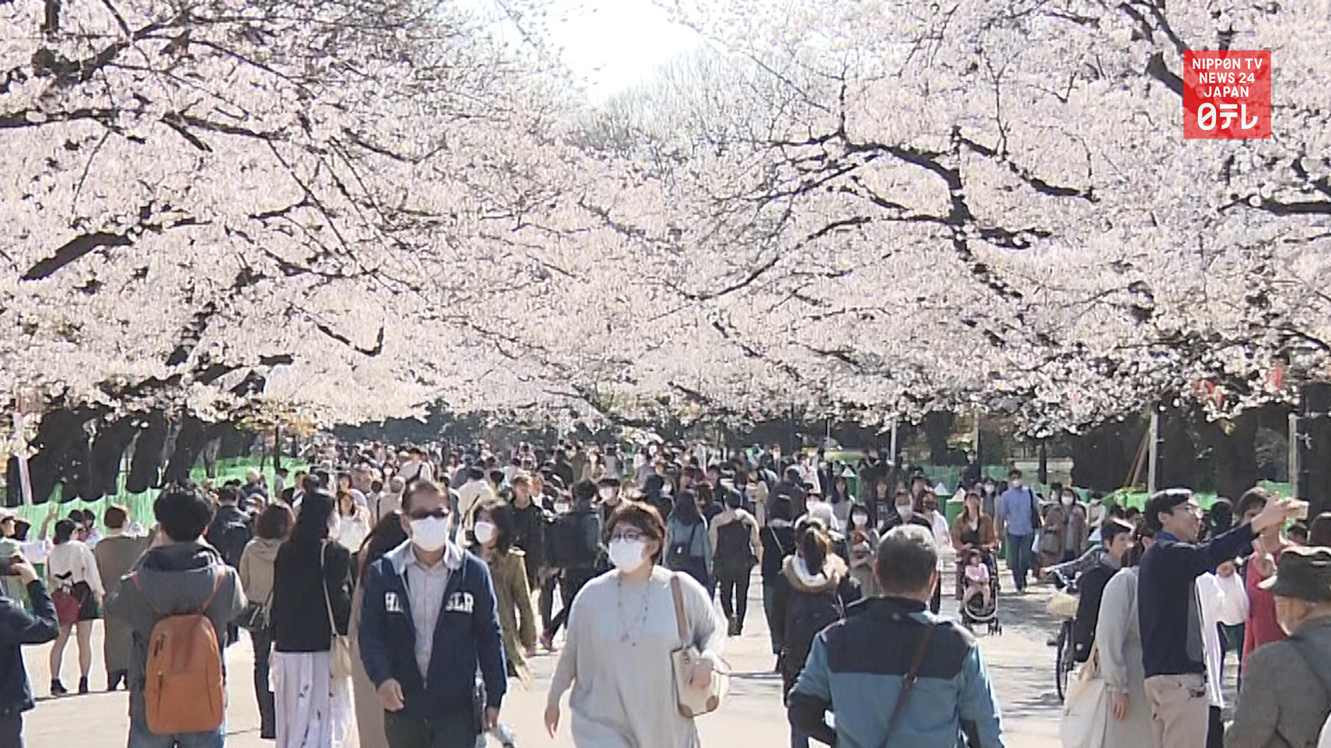 Tokyo urges no cherry blossom parties