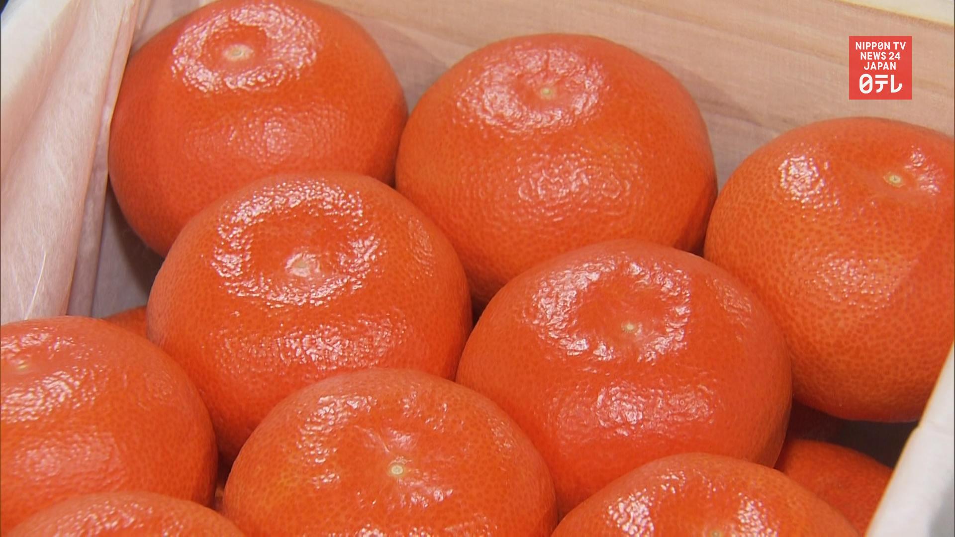 Mandarin oranges fetch record high price