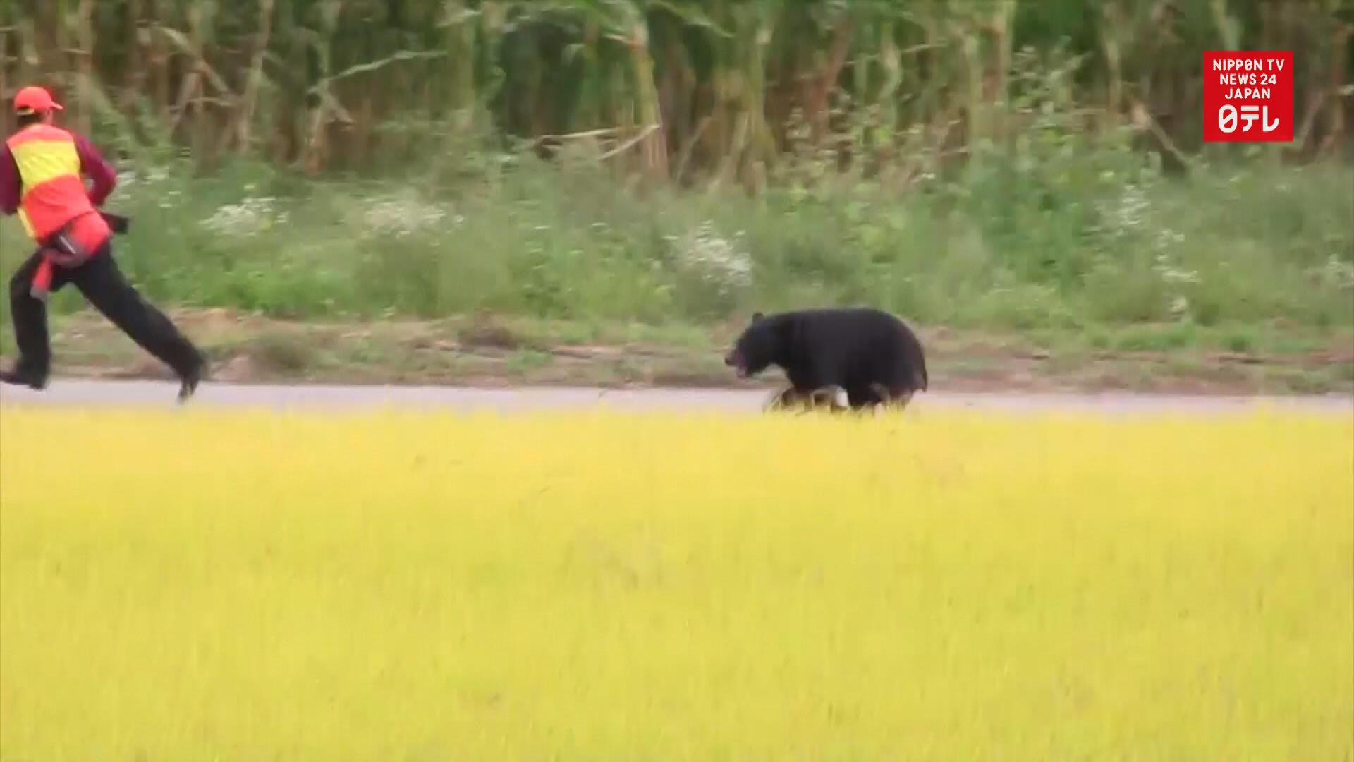 Bear strikes back