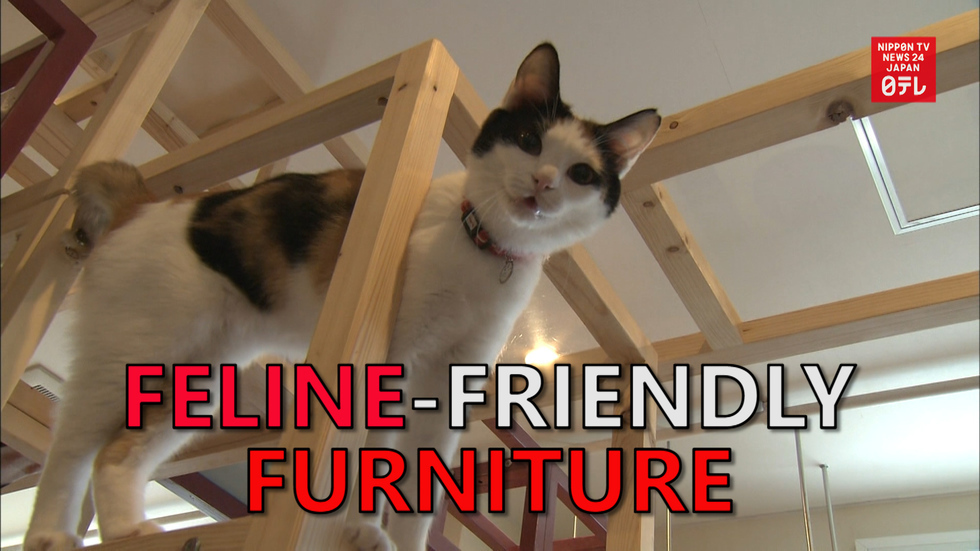 Furniture to make you purr
