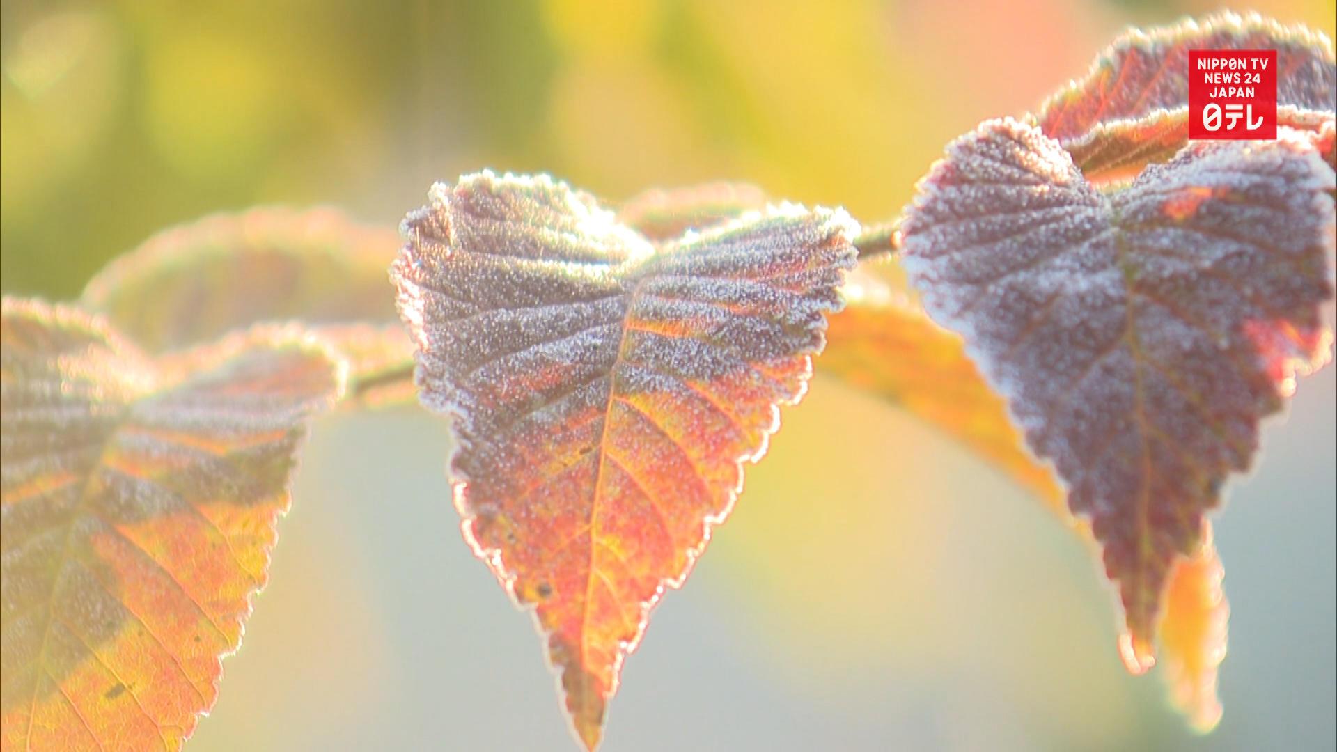 Subfreezing temperatures hit Hokkaido
