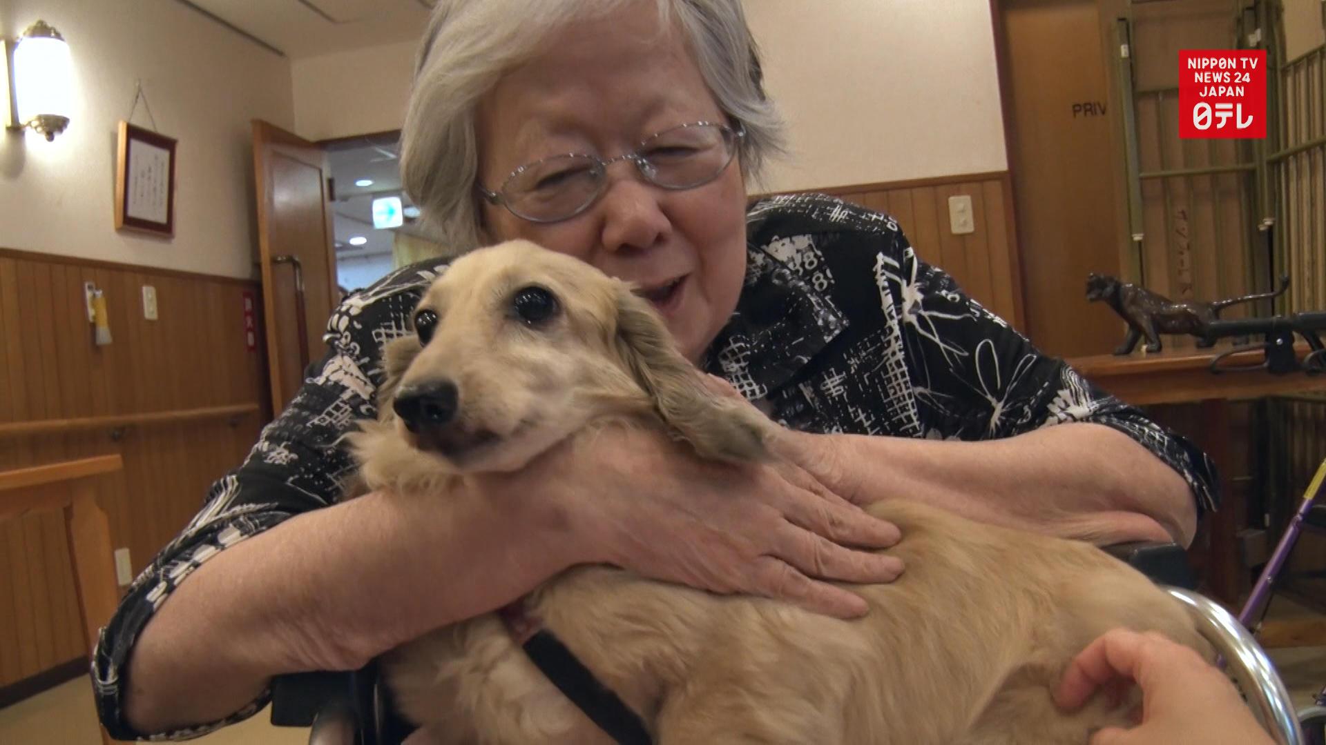Rescue dogs brighten up nursing home