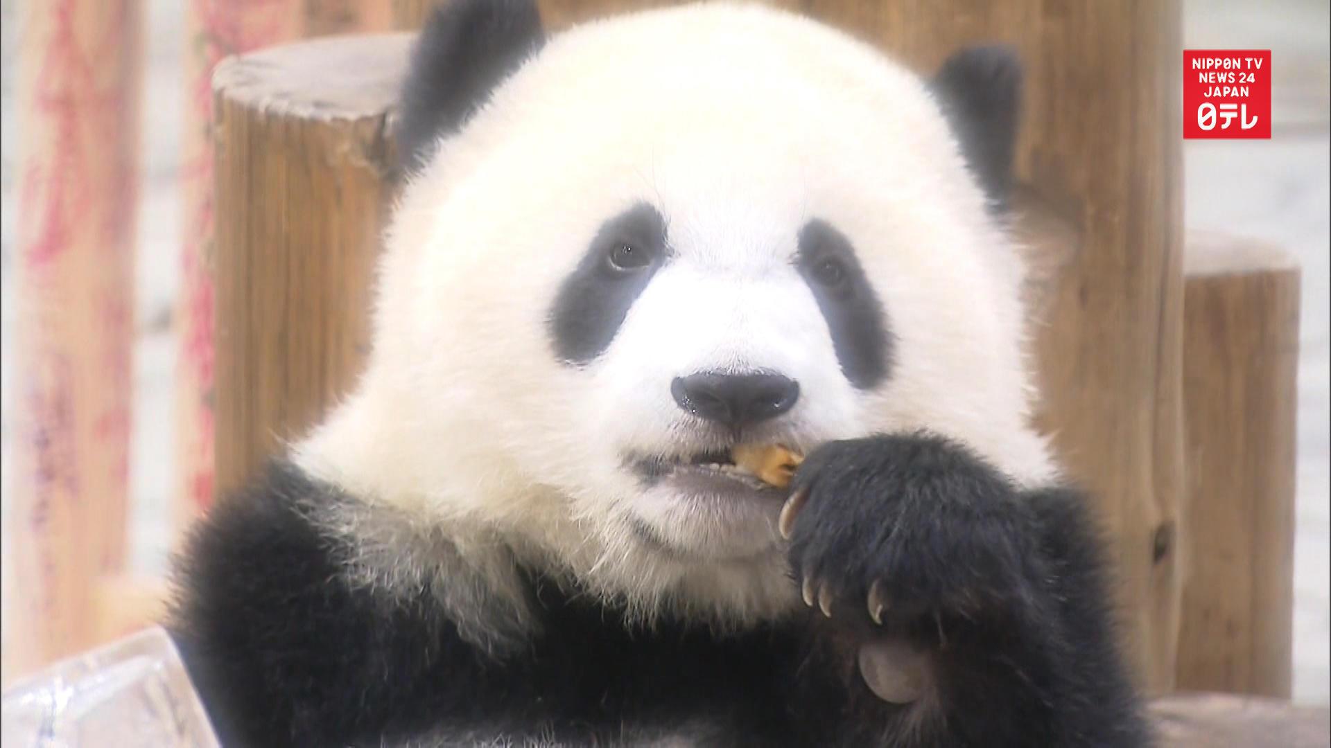 Giant panda Saihin turns 1