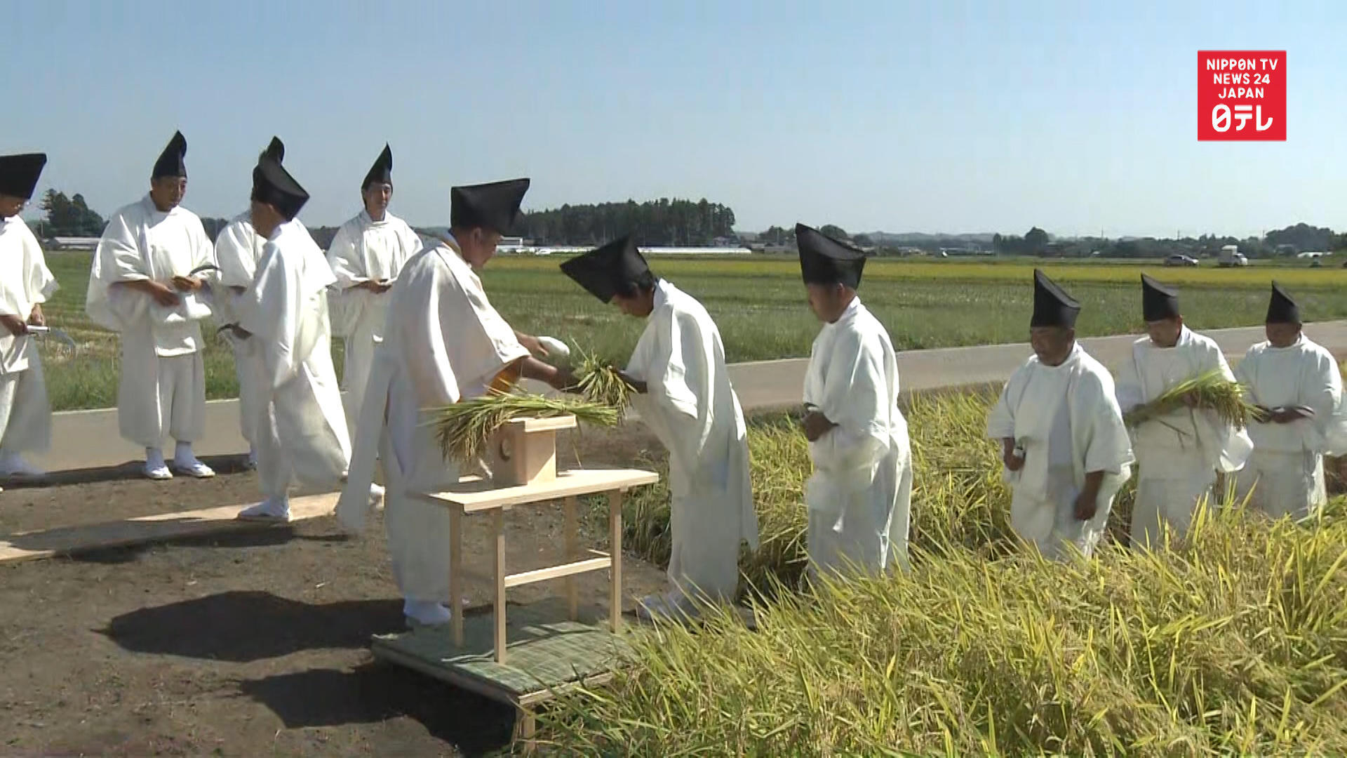Rice harvested for emperor's Daijosai rite