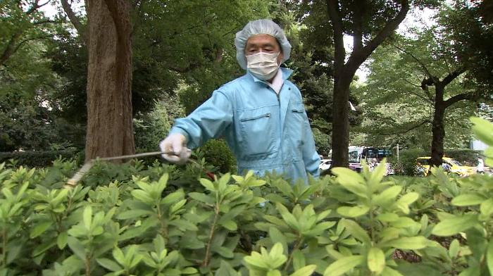 Dengue sourced to Ueno Park