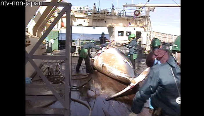 Japan sets new whaling plan with smaller catch
