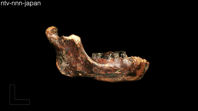New fossil may alter theories on early man in Asia